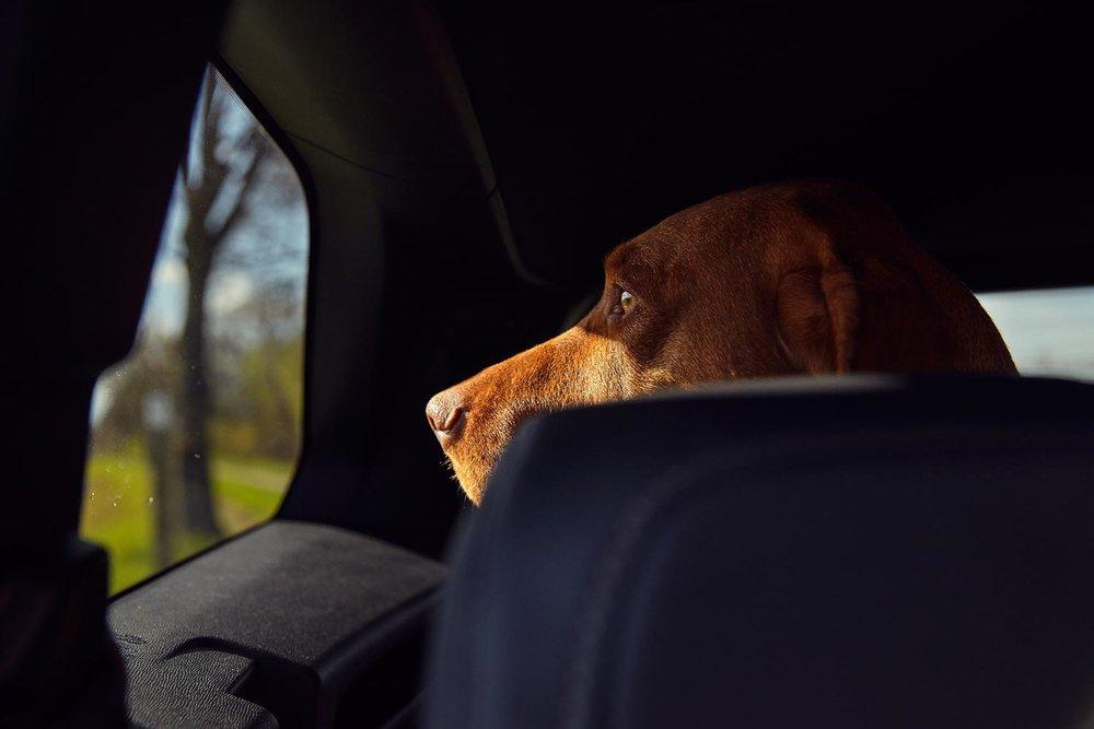 Peugeot_Dogs_MG_4100.jpg