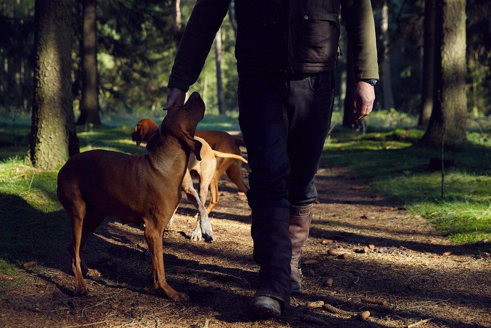 Peugeot_Dogs_MG_4504.jpg
