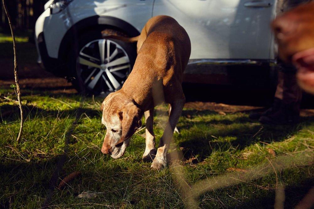 Peugeot_Dogs_MG_4612.jpg