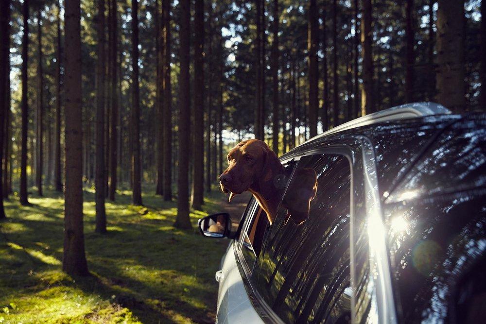 Peugeot_Dogs_MG_4806.jpg