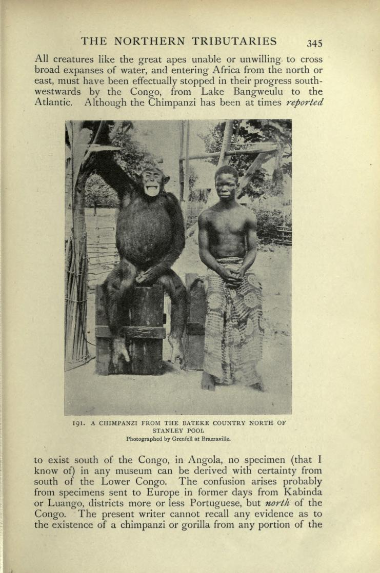 "Above: a chimpanzee photographed by George Grenfell. From:  ""George Grenfell and the Congo (Vol. 1)""  by Sir Harry Johnston, 1908."