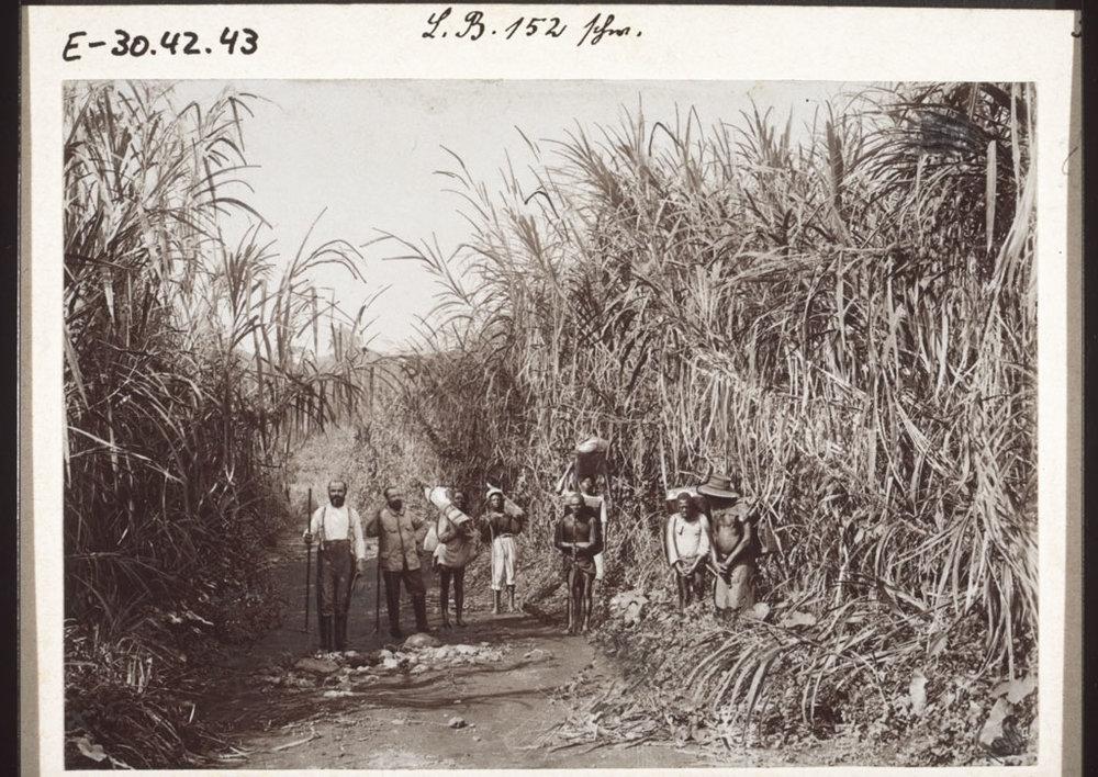 Marching through elephant grass, 1901.