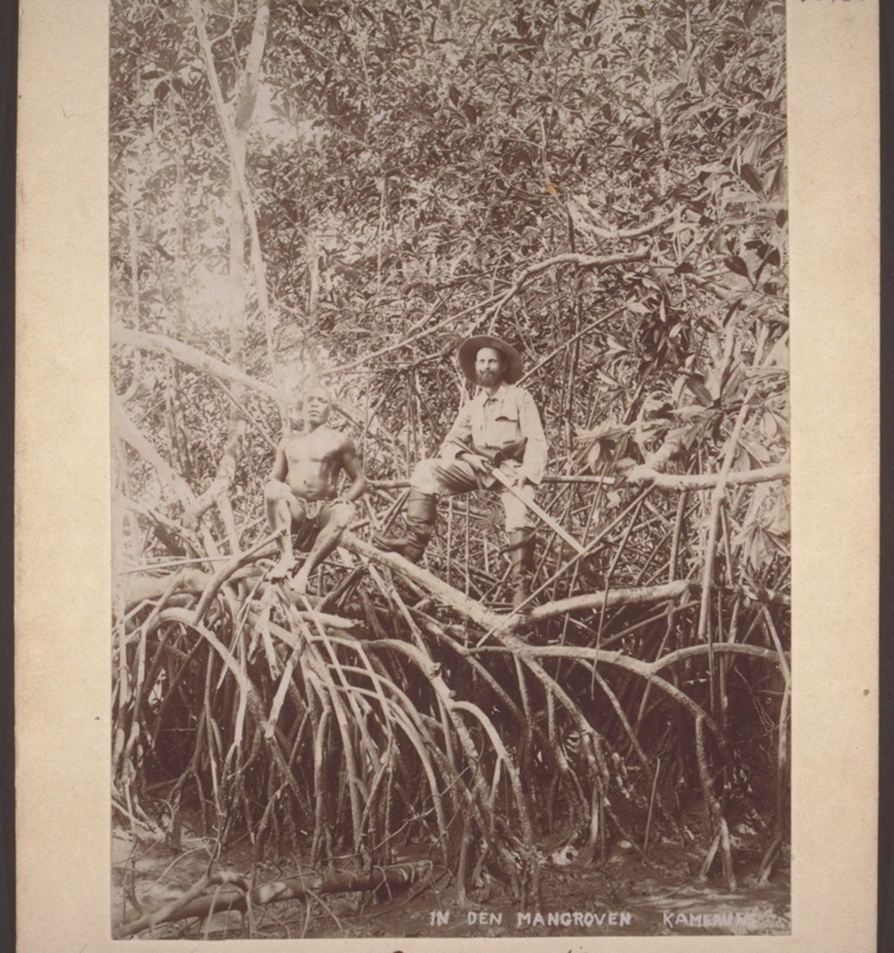 In the mangroves in Cameroon, 1900.