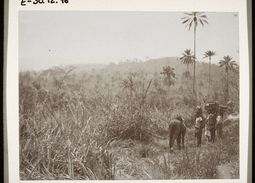 A trek across Cameroon in 1904.