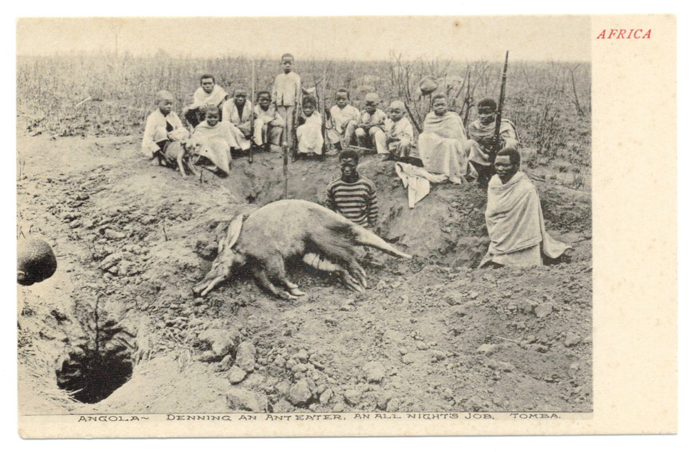 1900s_Angola_Tomba_Natives_killing_an_Anteater.jpg