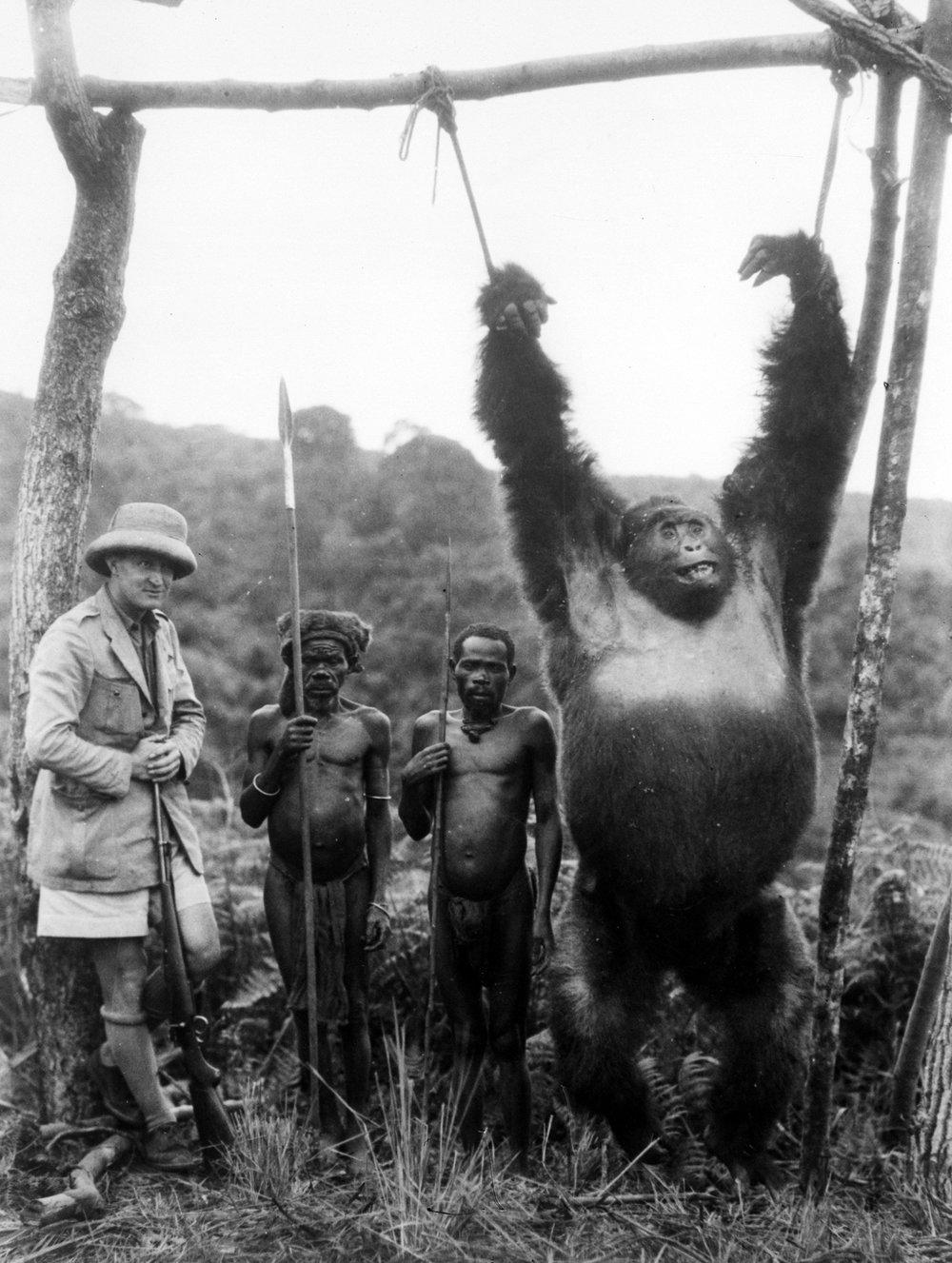 gorilla 20.jpeg