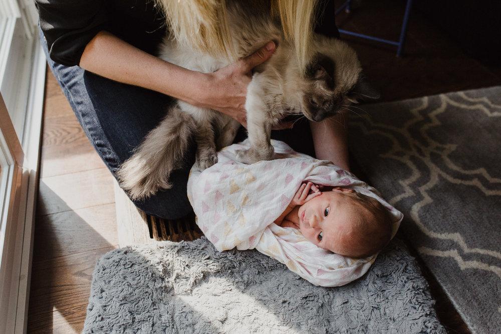 olivia o'young toronto newborn photographer