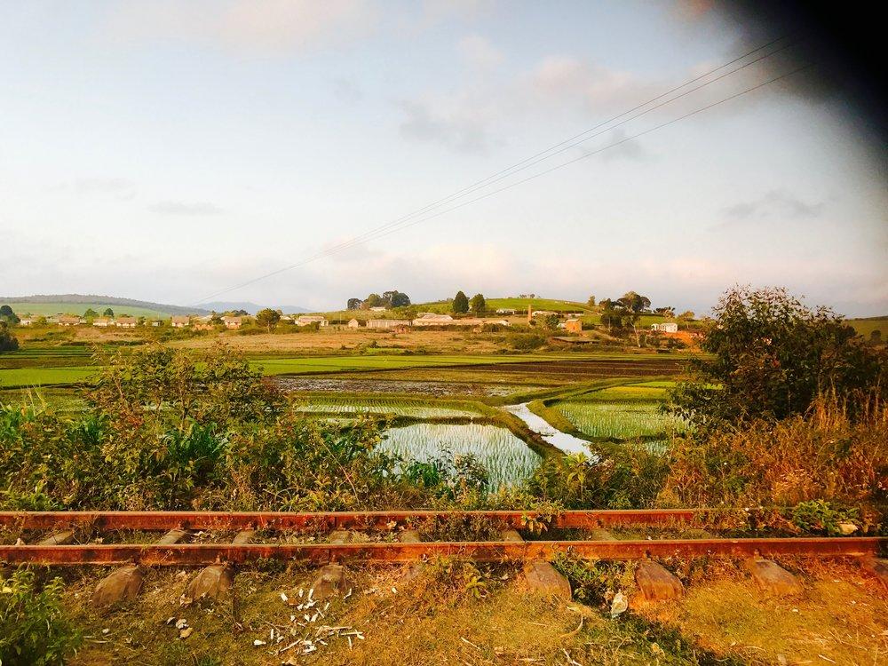 Train Tacks & Rice Fields. Photo by Jennifer Manzanillo