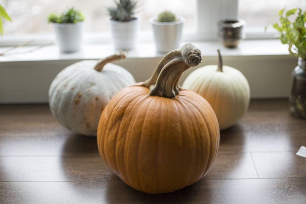 Pumpkins (2 of 6).jpg