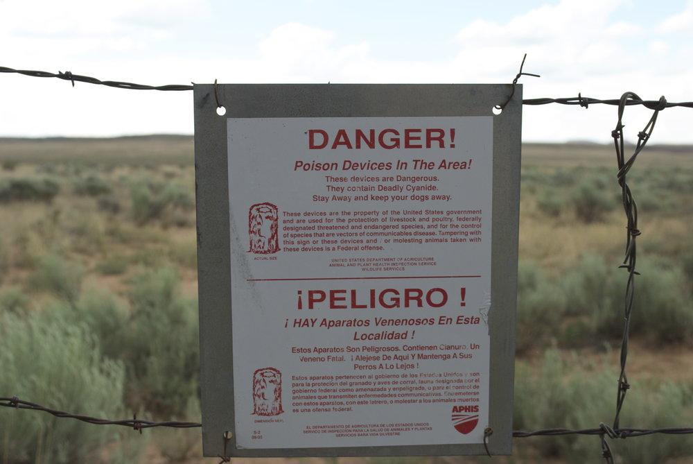 Danger Cyanide?