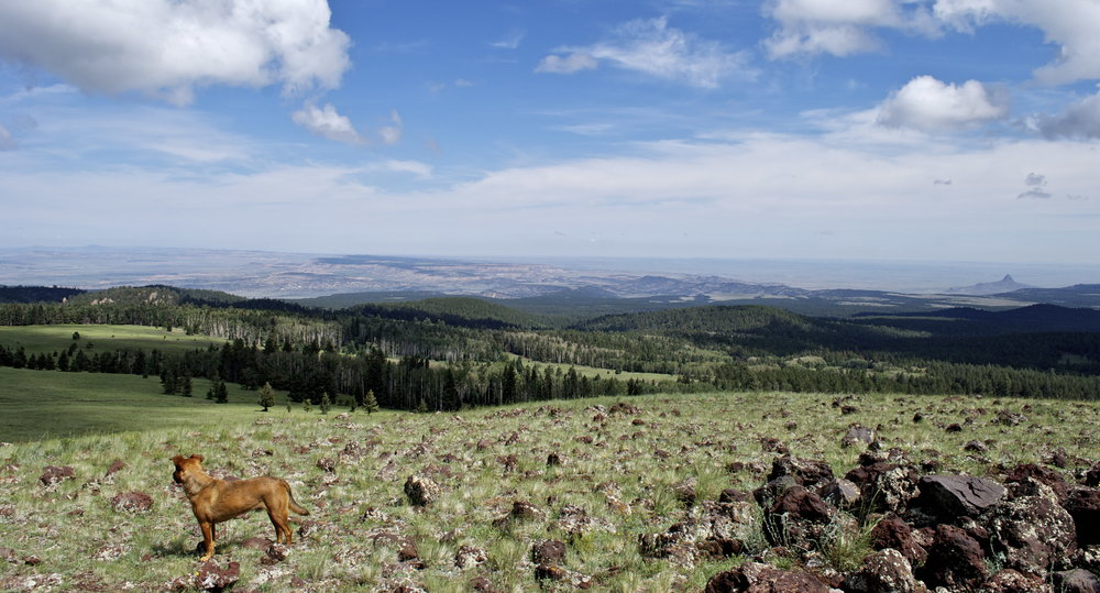 View Atop Mt. Taylor By Zane White. The View from the top of this truly sacred mountain is the best reason to oppose any further development of this land. A view seen by many before us. How many will see it after?