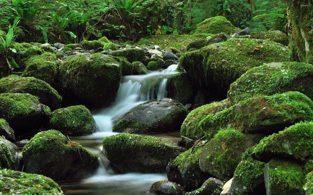 water-falling-through-the-mossy-rock-52644-2560x1600.jpg