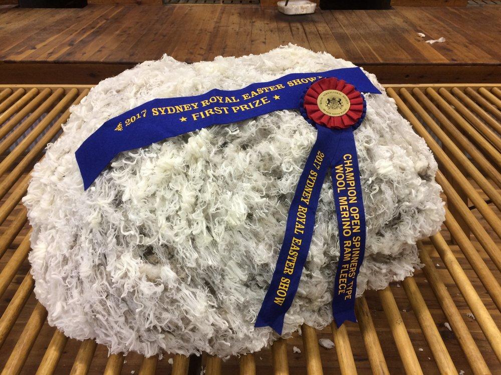The winning Champion Spinners Type Merino Ram fleece, 2017 Sydney Royal Easter Show