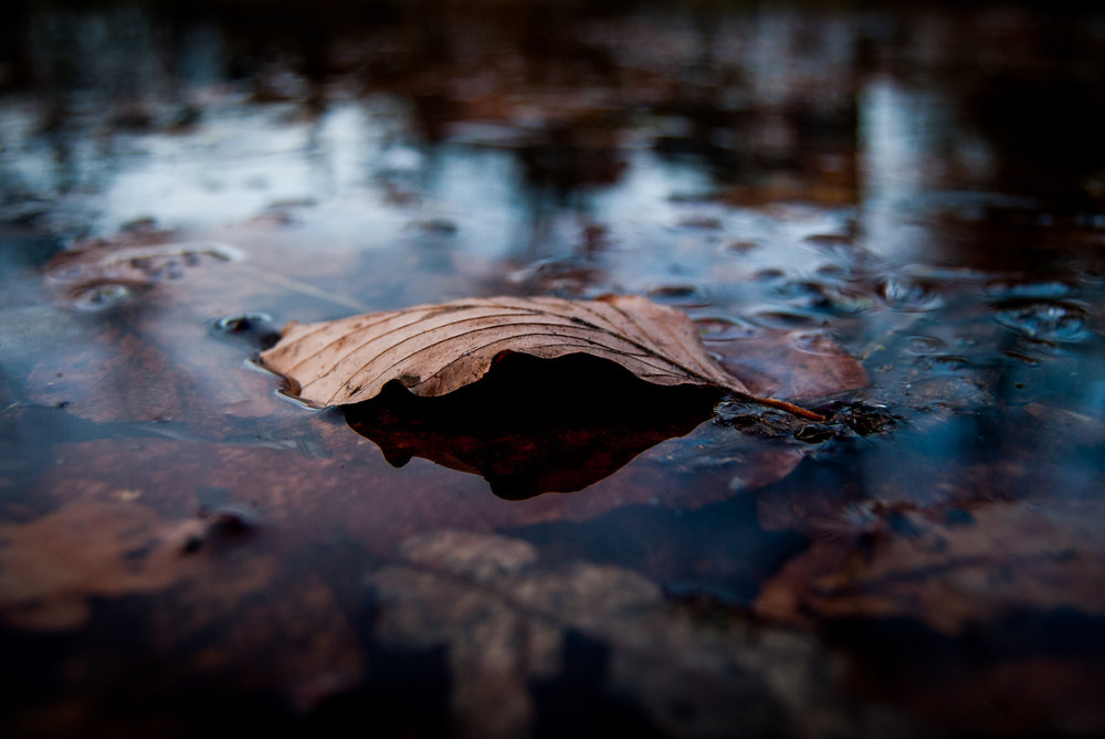 Sometimes it's nice to try taking pictures that doesn't include sports as well. This was taken in the park. Nikon D200.