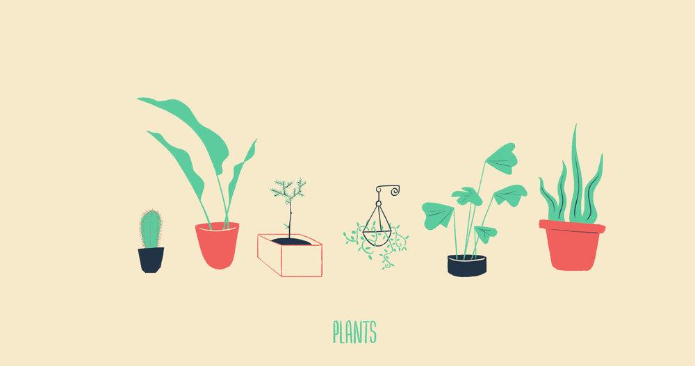 02 plants.jpg