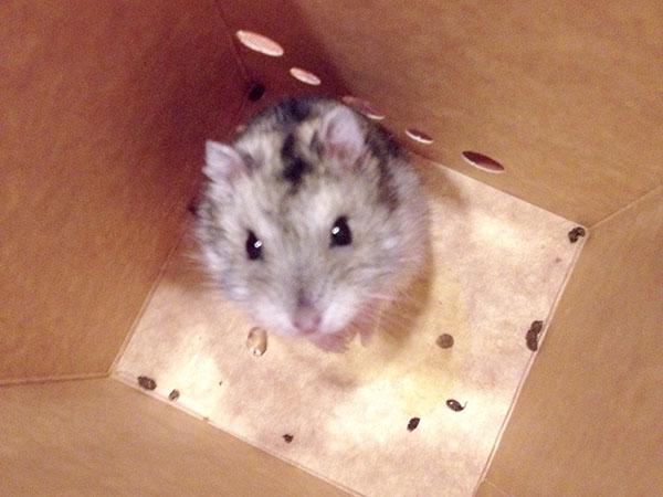 La carrera de la rata
