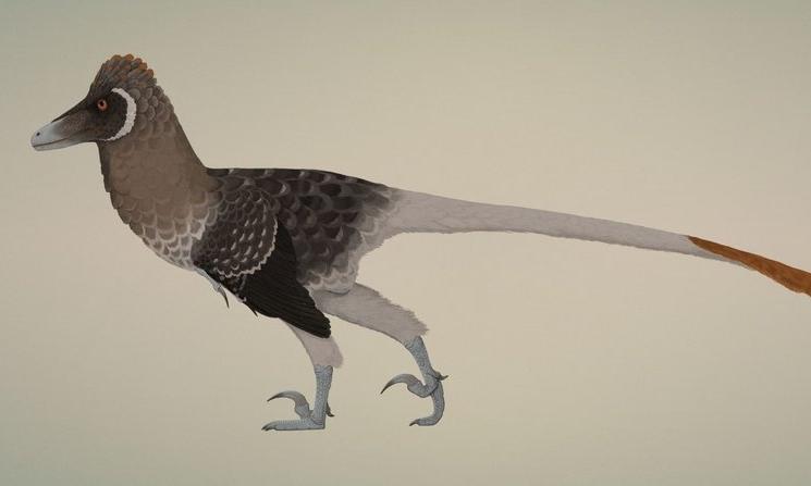 Conway,+Velociraptor.jpg
