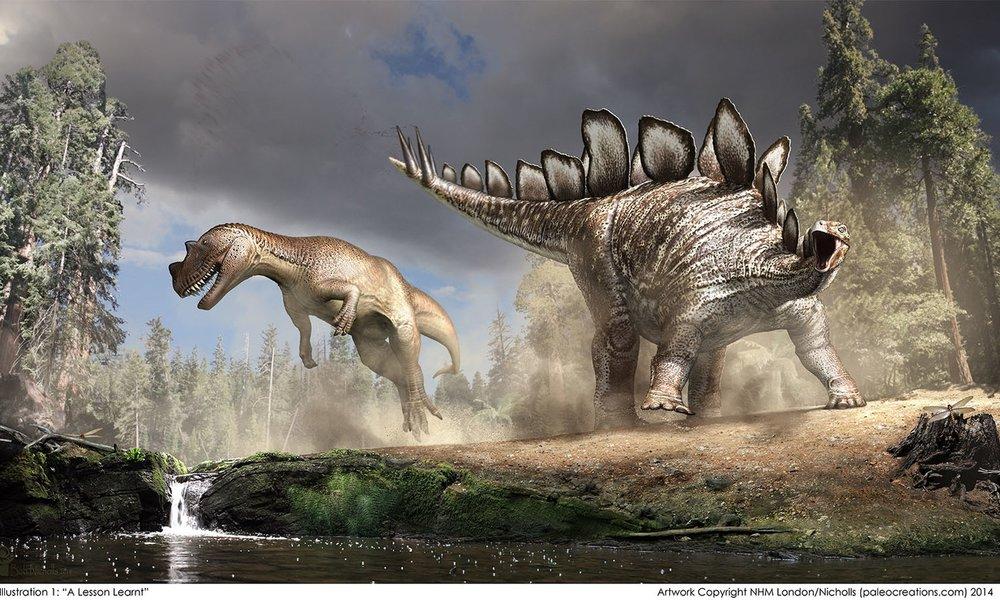 NHM+Stegosaurus+©Nicholls2014.jpg