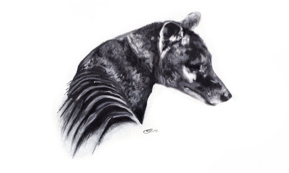 thylacine+complete2.jpg