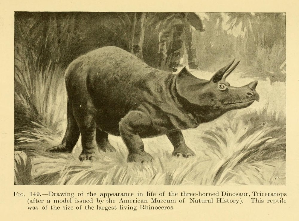 Figure 2.  Triceratops in E. Ray Lankester's children's book, Extinct Animals (1905). Lankester, formerly Director of the London Natural History Museum, described the 'incredibly small' brain of this dinosaur compared to the size of its head, observing that '[v]ery probably this small size of the brain of great extinct animals has to do with the fact of their ceasing to exist.' E. Ray Lankester, Extinct Animals (London: Constable, 1905), pp. 207, 209.