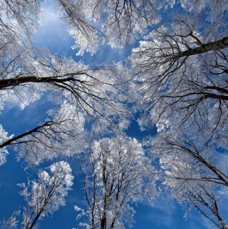 Træer i himlen.jpg