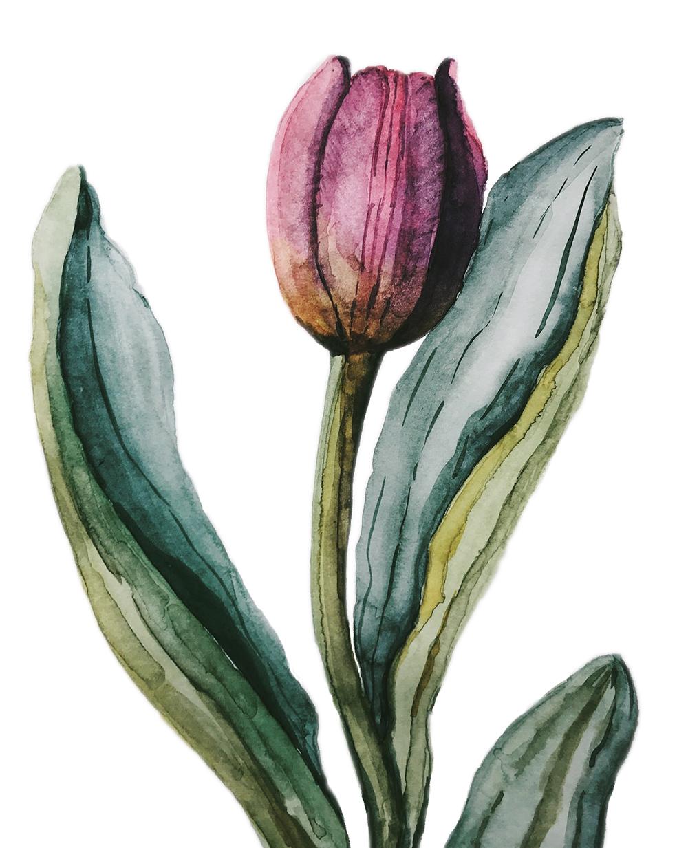 tulip-original.jpg