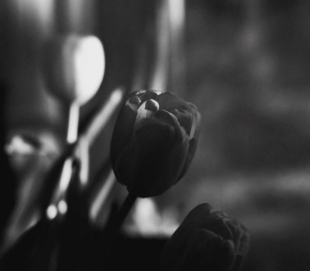 Black & white mood on today 😆Un poco de sobriedad colorística para variar. #blackandwhitelove #blackandwhitemood . . . . . #Freeupmyinsta  #inspirewithblooms #amomentofwonder #flowermagic #floral_perfection #inspiredbypetals #nestandflourish #aquietstyle_flowers #calm_collected #florifotos #sogreatisthepowerofbeauty #pursuepretty #darlingmovement  #thehappynow #slowfloralstyle #dsfloral #awhisperedbeauty #seekthesimplicity #worldinbloom #inspira_t #lafotodeldía #pusuepretty #underthefloralspell #botanicalpickmeup #underthefloralspell #slowlivingforlife #acozywinter