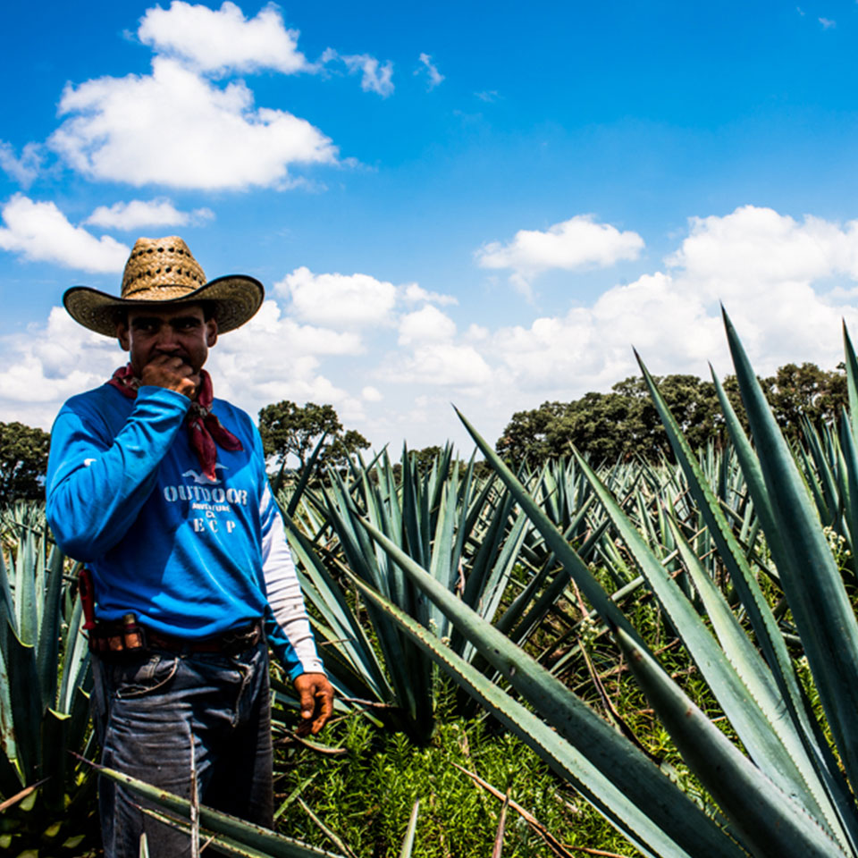 The-art-of-tequila-1.jpg