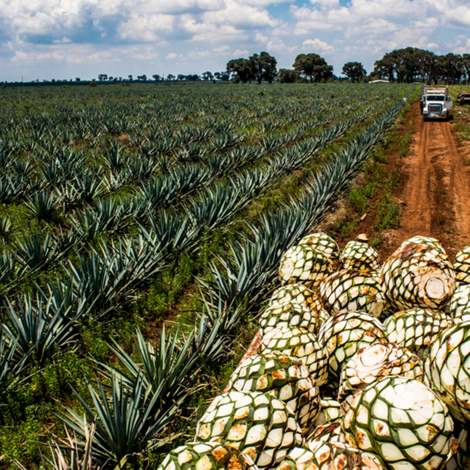 The-art-of-tequila-3.jpg