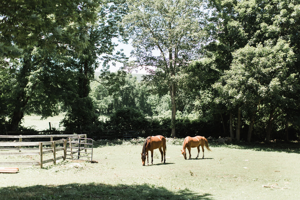 The Spirit Horse Farm