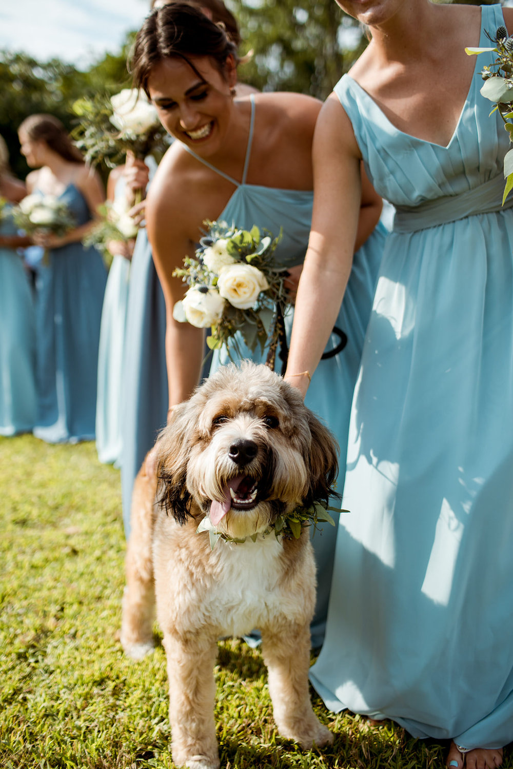 Having your fur baby (dog) be a part of your ceremony! - Pearl Weddings & Events
