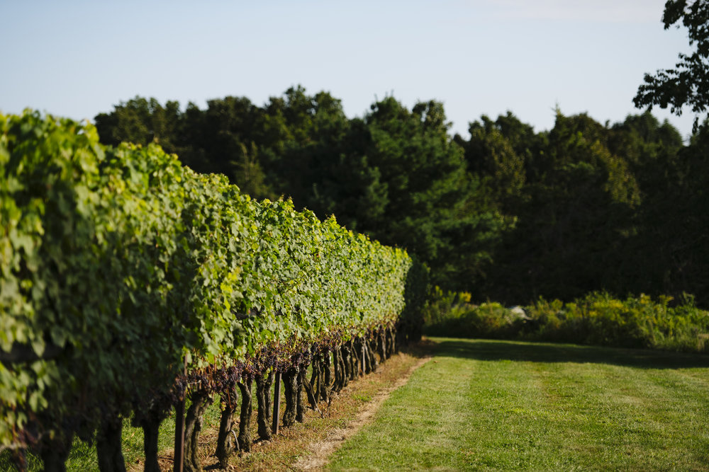 Ceremony and wedding reception at Jonathan Edwards Winery in Connecticut - Pearl Weddings & Events