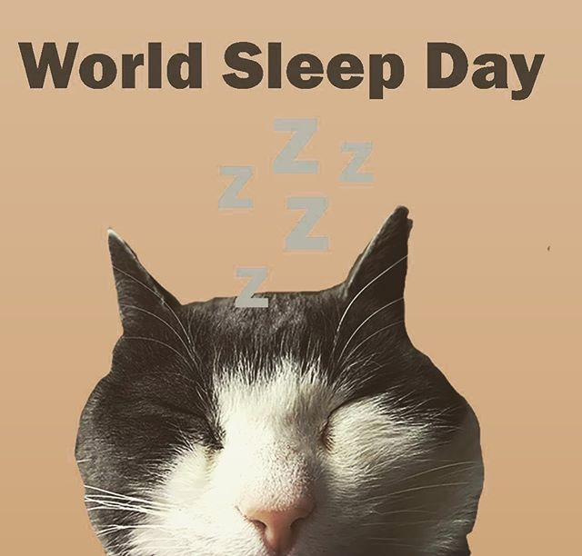 Today is World Sleep Day! If you check out our stories, we'll give you some suggestions of books where people are: . ✅ Falling asleep ✅Sleeping ✅Waking up ✅Thinking about sleeping (Also, did we use the Instagram slumber filter on this picture? Well, yes we did) . . . #worldsleepday #worldsleepday2019 #storytourist #cat #catsofinstagram #catsofinsta #sleep #sleeping #literature #books #bookstagram