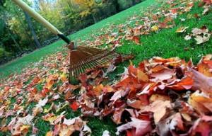 Fall-Cleanup-300x192.jpg