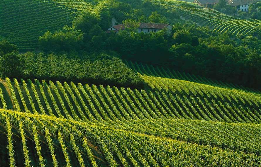 vineyard-italy.jpg
