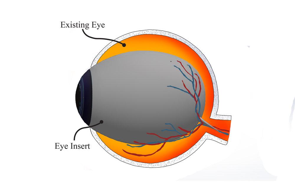 Eye insert for page 19.jpg