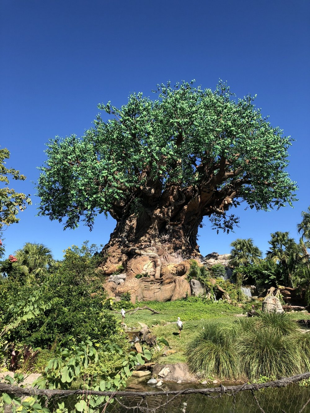 DOAD Animal Kingdom- Tree of Life