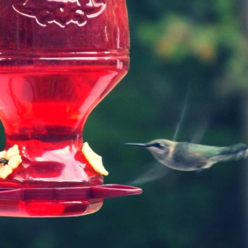 Sometimes the inexpensive feeders are the most popular.