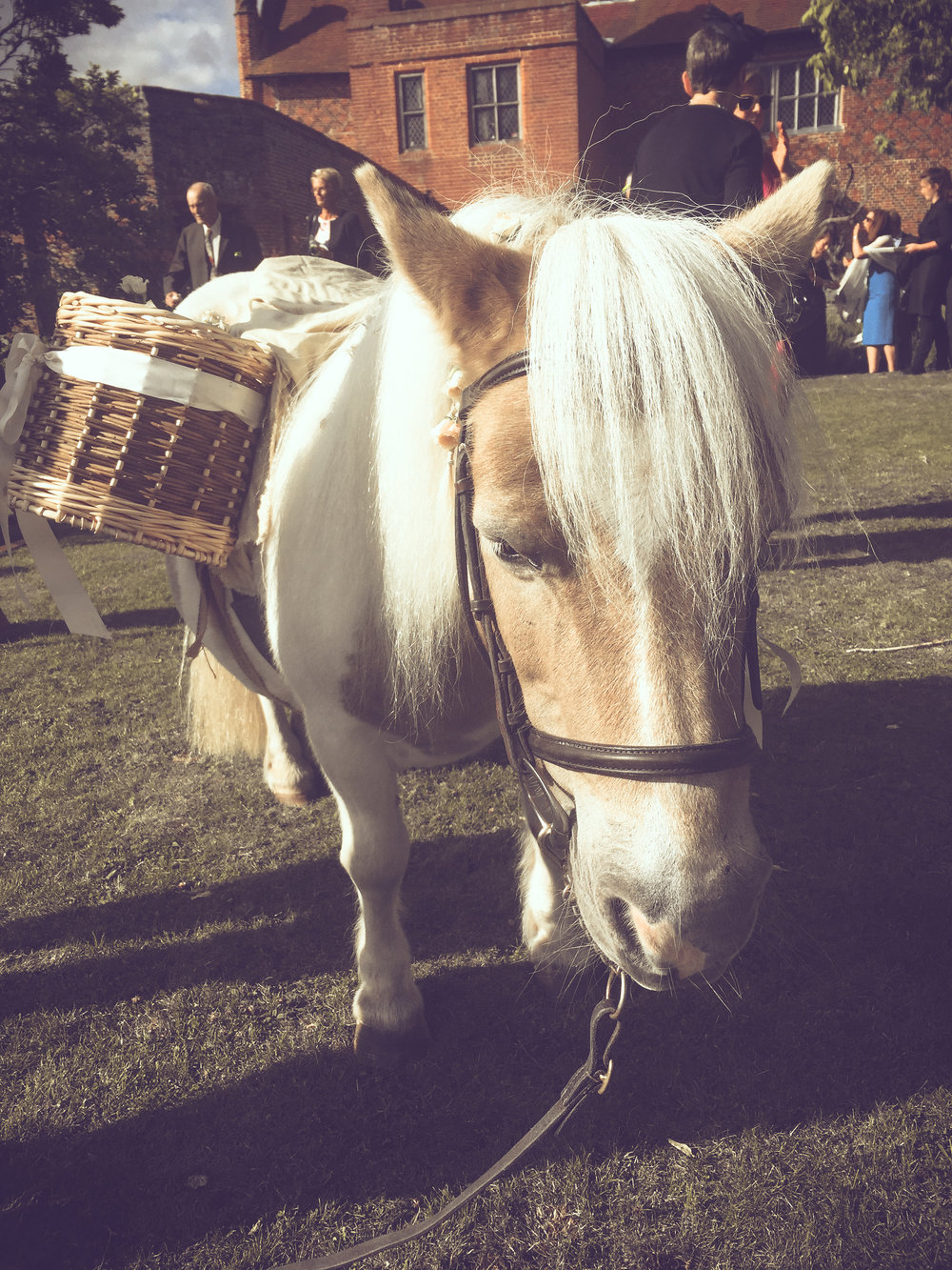 PonyWine.jpg