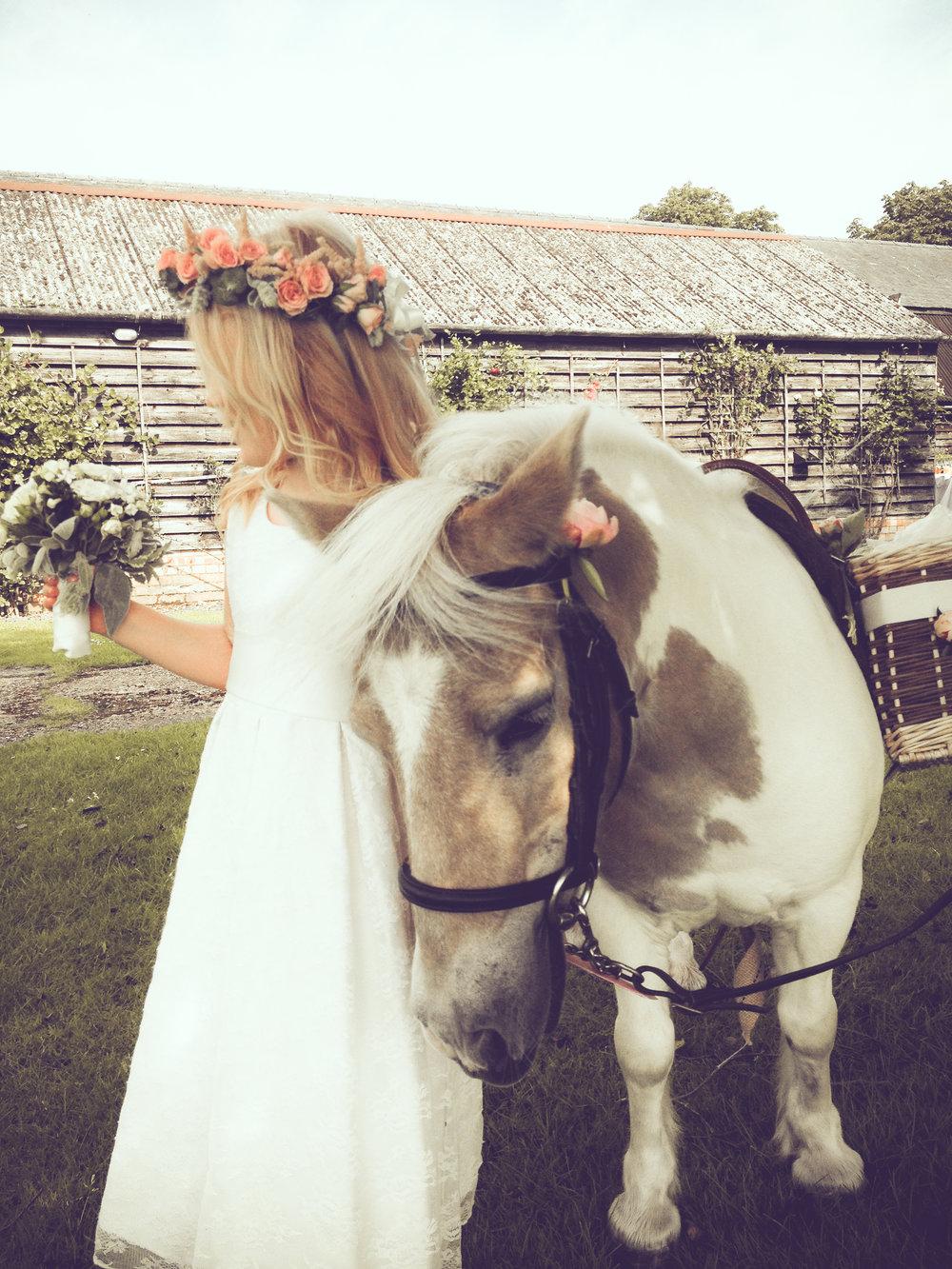 PonyWine6.jpg
