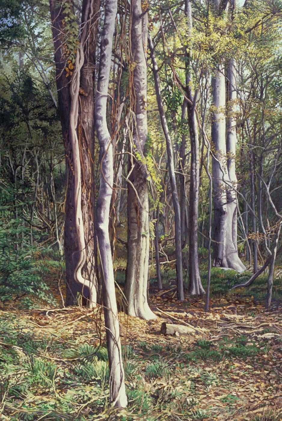 woods near my home