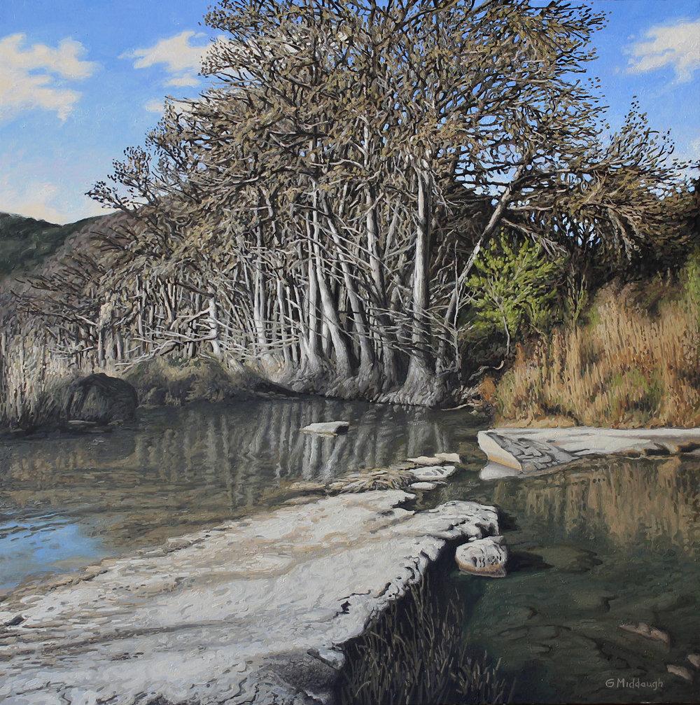 grove of trees, frio river