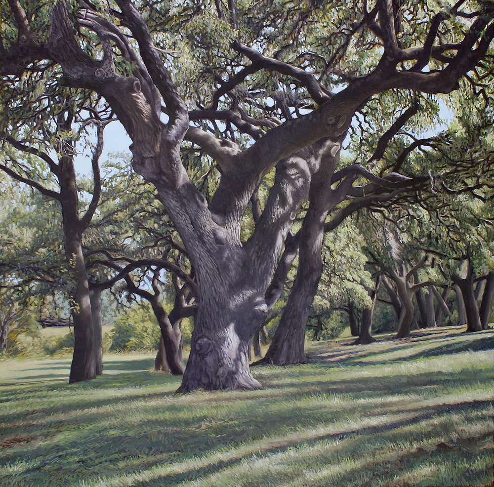 massive oak, lbj state park