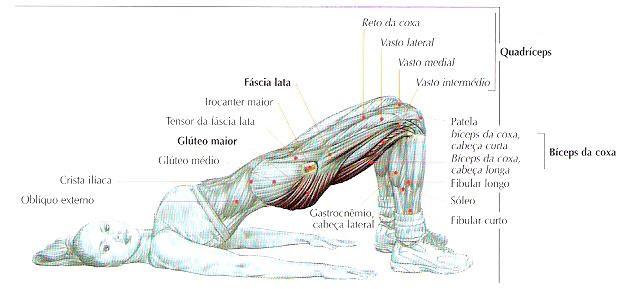 Ativação dos músculos glúteo máximo em um dos principais exercícios do Pilates: a ponte.