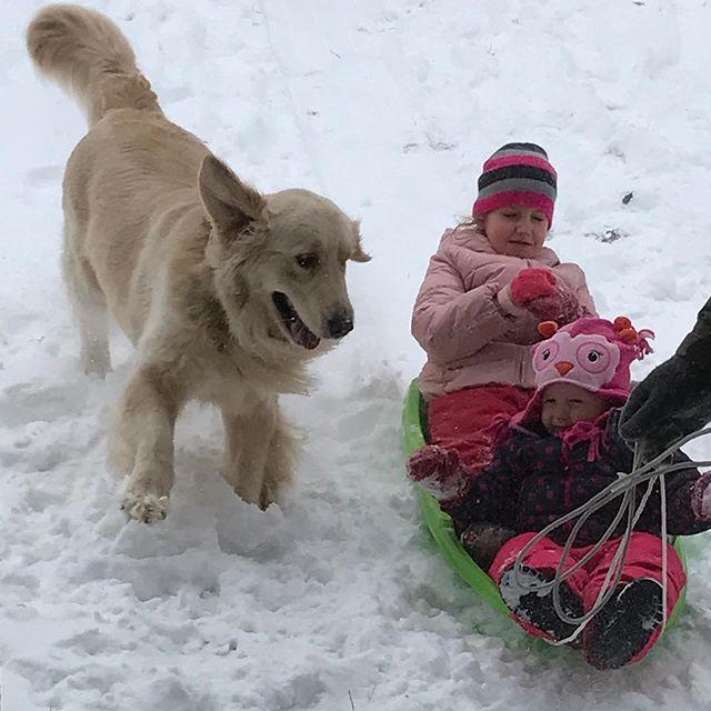 These three love snow days! ❄️🐶👱🏻♀️👶🏼❄️ #servicedog #cutegene #goldenretriever #snowday #sledding