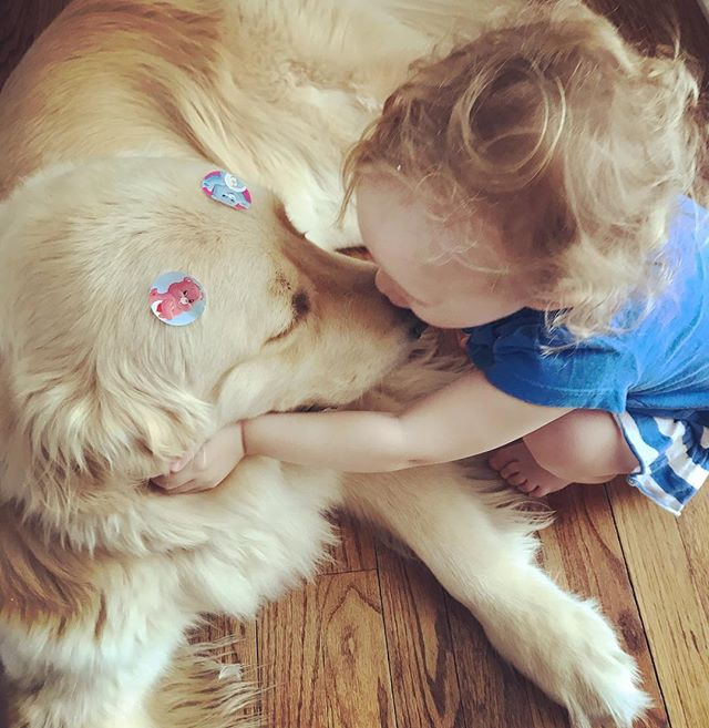 Oh my god!!!! This sums up Patrick... patient, kind and so loved! Yes, those are Care Bear Stickers! ❤️ #servicedog #cutegene #patrickthepup #goldenretriever #babiesanddogs #5q143deletion