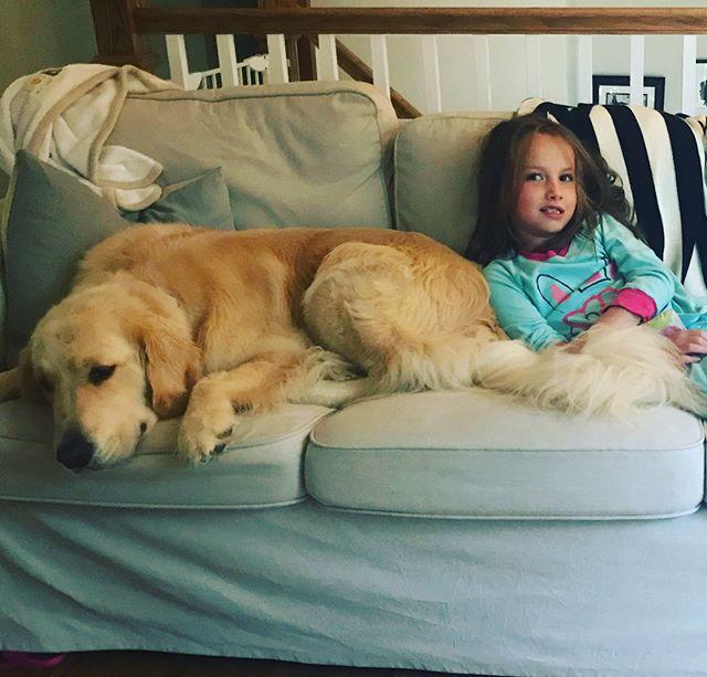 Morning cuddles are the best! #servicedog #cutegene #mef2c #5q143deletion #goldenretriever