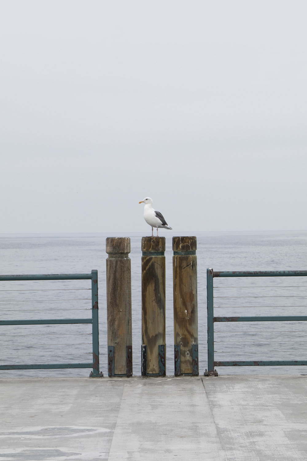 Pier Website bird.jpg