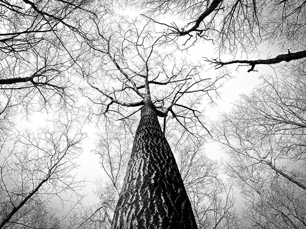 UpTrees.jpg