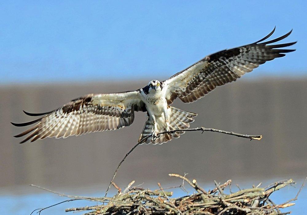 landing.jpeg